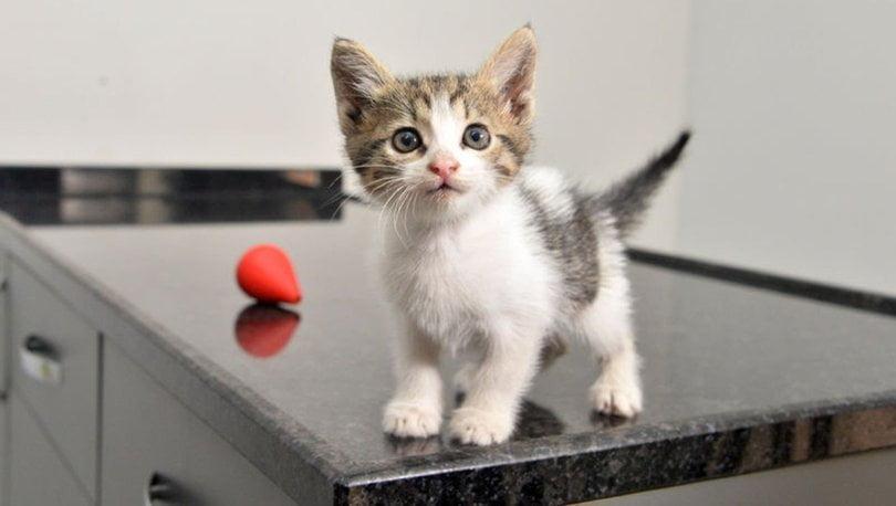 Yavru Kedide Oluşabilecek Sorunlar!