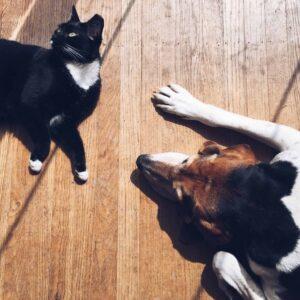 kedi ve köpeklerde