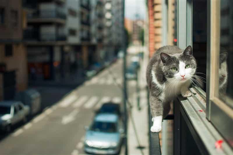 Kedilerde yüksekten düşme vakaları